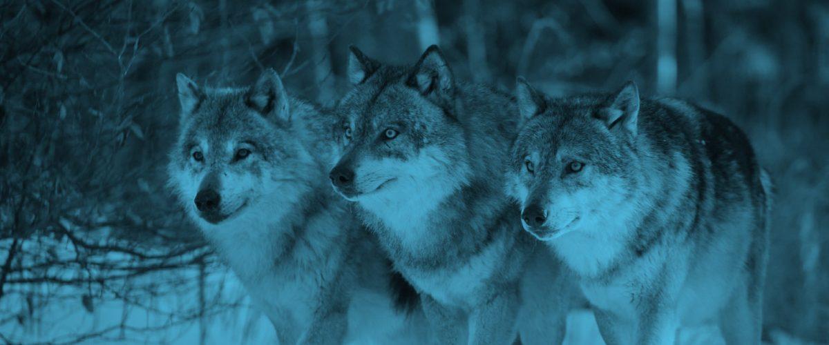 WolfOfMarketing